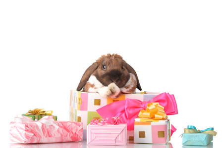 Lop-eared rabbit in a gift box with pink bow isolated on white Stock Photo - 14134871