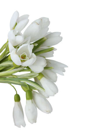 beautiful bouquet of snowdrops isolated on white