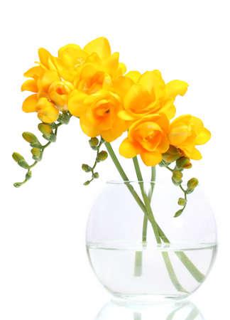 freesia: Beautiful yellow freesias in vase isolated on white