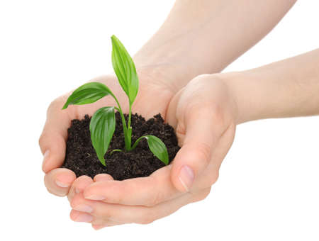 Young plant in hands isolated on white Stock Photo - 14134829