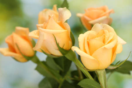 valentinas: beautiful bouquet of roses on green background