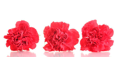 Three red carnation isolated on white photo