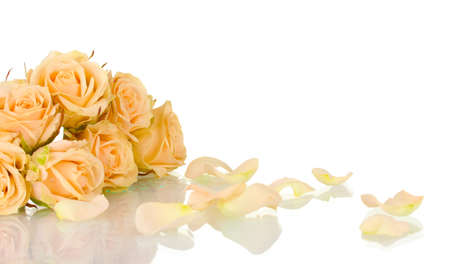 soft corals: Many roses on white background Stock Photo