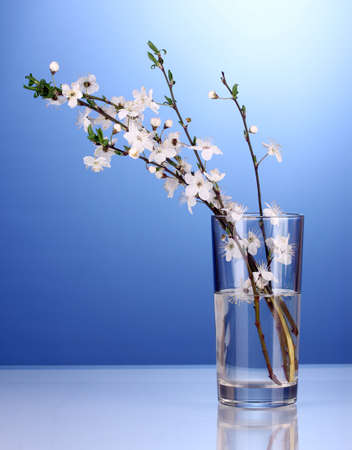 beautiful cherry blossom in vase on blue background photo