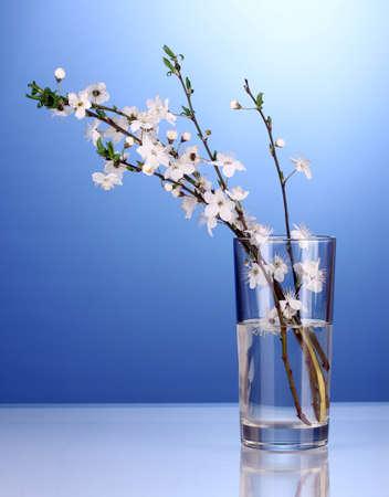 florero: hermosa flor de cerezo en el florero sobre fondo azul