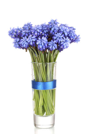 Muscari - hyacinth in glass isolated on white photo