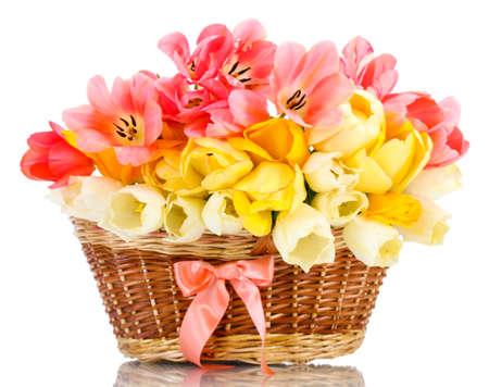 flores de cumpleaños: bellos tulipanes en la cesta aislada en blanco