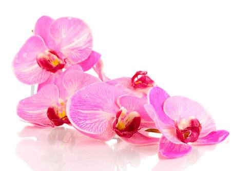 orchidee: Bella fioritura orchidea isolato su bianco