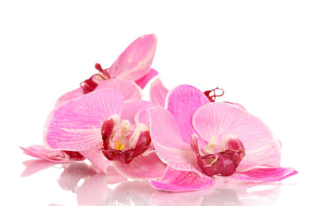 pink orchid: Beautiful blooming orchid isolated on white