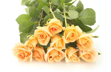 beautiful bouquet of roses isolated on white photo