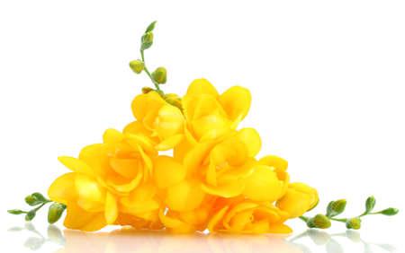 pastel flowers: Beautiful yellow freesias isolated on white