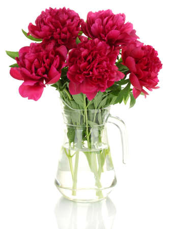 beautiful pink peonies in glass jar with bow isolated on white photo