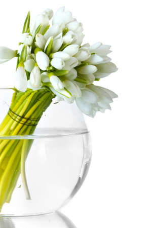snowdrop: beautiful bouquet of snowdrops in transparent vase isolated on white