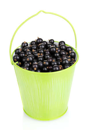 Black currant in metal bucket isolated on white photo
