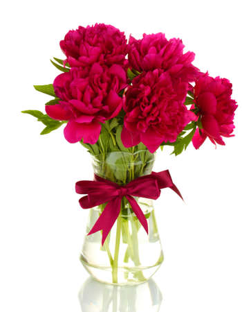 beautiful pink peonies in glass vase with bow isolated on white photo
