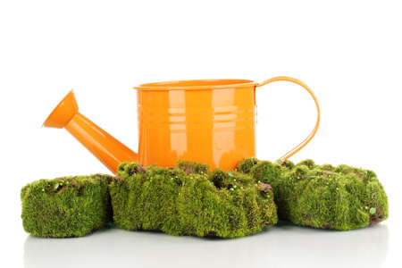 Green moss with watering can isolated on white photo