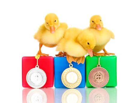 Three duckling on championship podium isolated on white photo