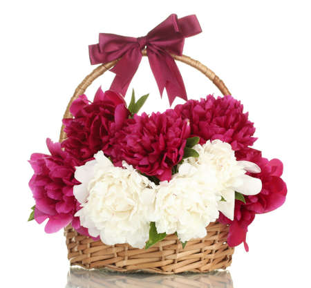 beautiful pink and white peonies in basket with bow isolated on white photo
