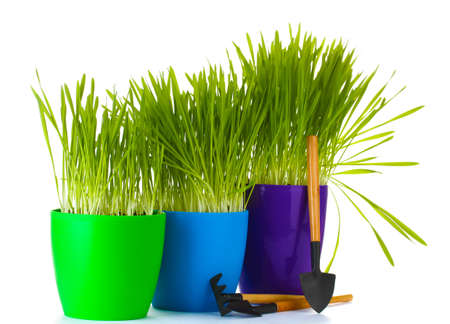 beautiful grass in a flowerpots and garden tools isolated on white photo