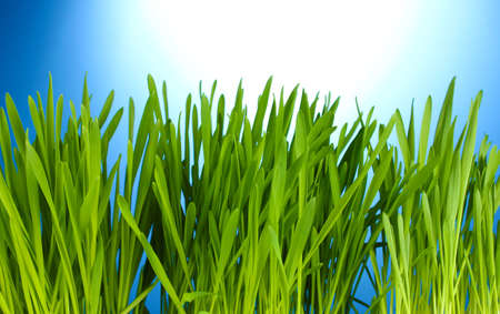 beautiful green grass on blue background photo