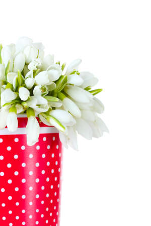 beautiful bouquet of snowdrops in red vase isolated on white photo