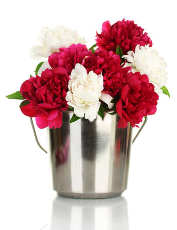 beautiful pink and white peonies in bucket isolated on white photo