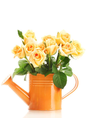 valentinas: beautiful bouquet of roses in watering can isolated on white Stock Photo