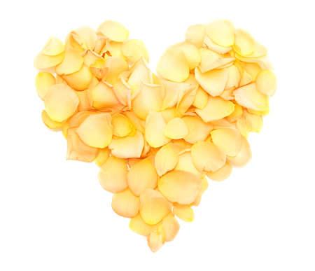rosas amarillas: hermoso corazón de la naranja pétalos de rosa aisladas en blanco