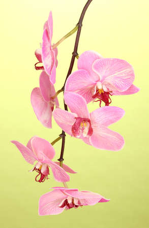 Beautiful blooming orchid on green background photo