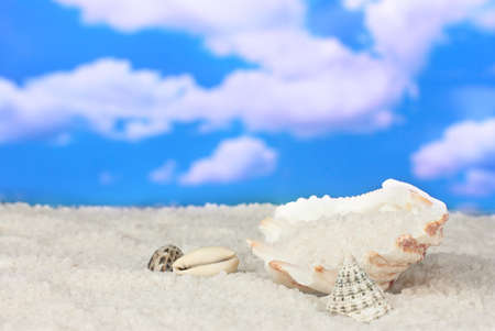 Sea Salt with seashells on a background of sky close-up photo