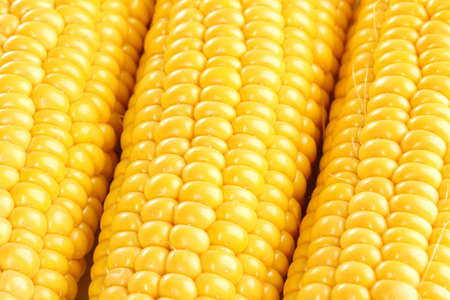 corn background photo