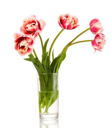 Beautiful tulips in vase isolated on white photo