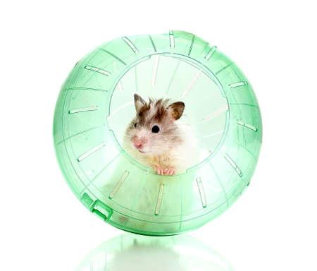 Cute hamster popping out of green ball isolated white photo