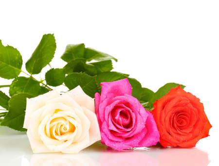 Beautiful roses isolated on white photo