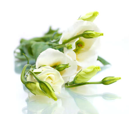 beautiful spring flowers isolated on white photo
