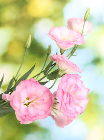 bouquet of eustoma flowers, on green background photo