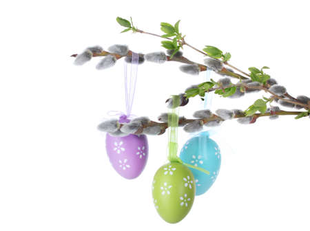 brown pussy: pussy-willow twigs with Easter eggs isolated on white