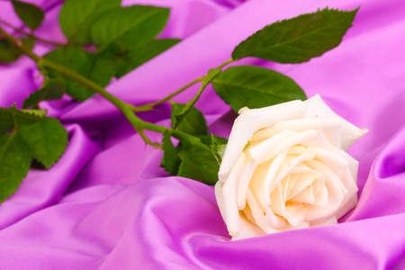 Beautiful rose on lilac cloth photo