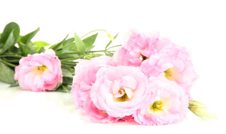 bouquet of eustoma flowers, isolated on white photo