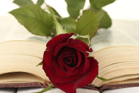 a bright red rose on the open book close-up photo