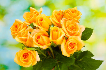 beautiful bouquet of roses on green background photo