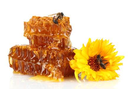 honey comb: sweet honeycomb with honey, bee and flower, isolated on white