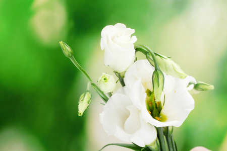 beautiful spring flowers on green background photo