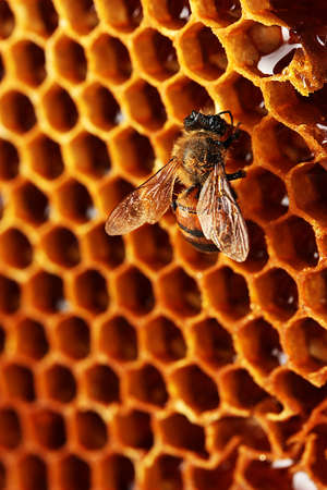 hive: yellow beautiful honeycomb with honey and bee, background Stock Photo