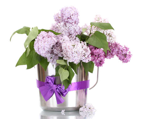 metal spring: beautiful lilac flowers in metal bucket isolated on white Stock Photo