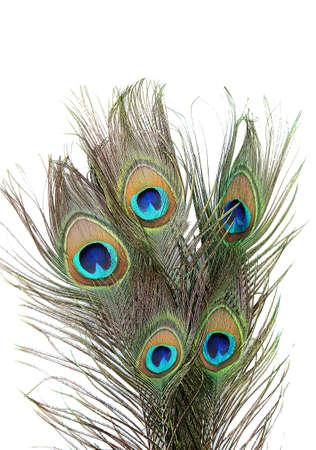 pluma de pavo real: Plumas del pavo real en el fondo blanco close-up