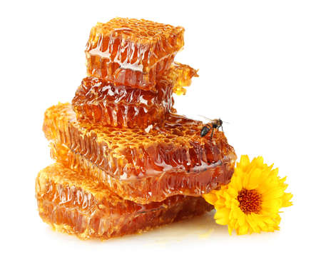 sweet honeycomb with honey, bee and flower, isolated on white photo
