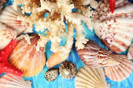 Sea coral with shells on blue background close-up