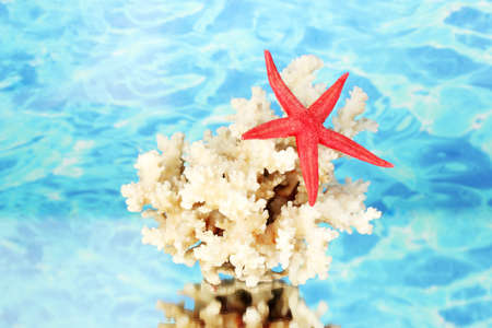 Sea coral with starfish on water background close-up