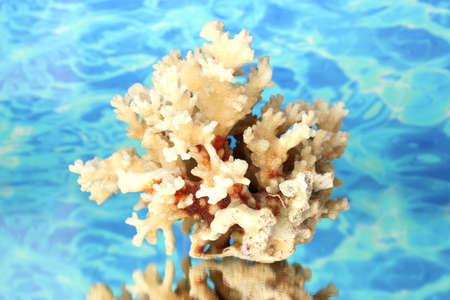 Sea coral on water background close-up Stock Photo
